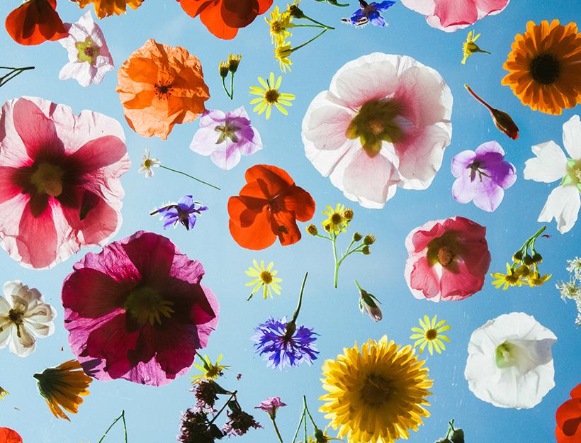 floral-tinctures-stocksy_txp14ea9ad2lpk100_medium_316462