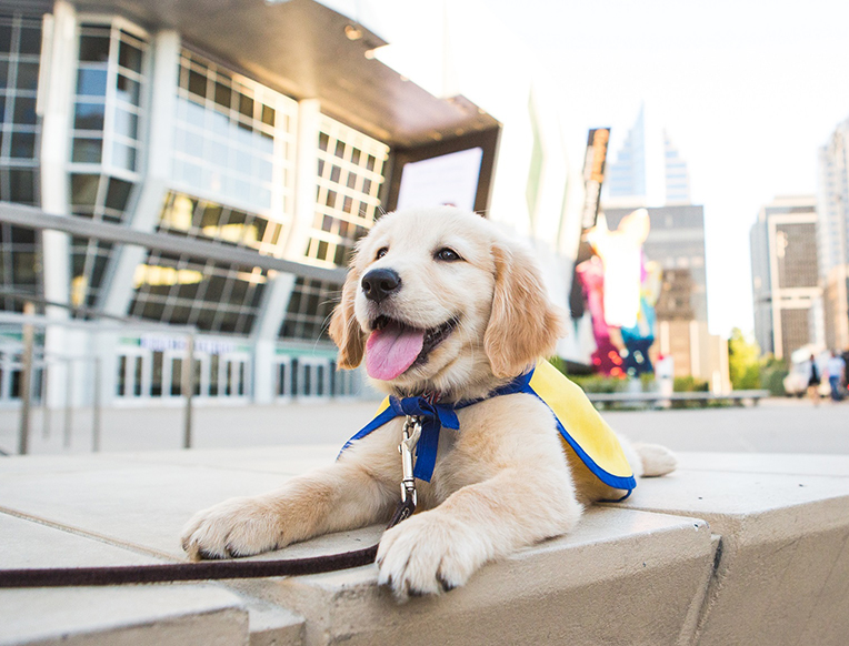 Canine Companions for Independence <br>Nationwide