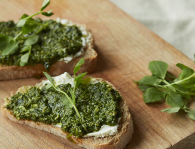 PEA SHOOT PESTO WITH LEMON RICOTTA ON TOAST_390x297