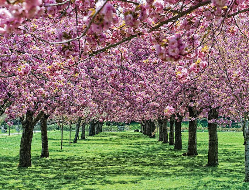 Brooklyn Botanic Garden Goop
