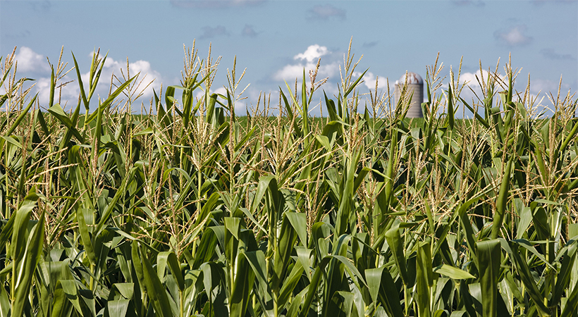 Why GMOs Matter