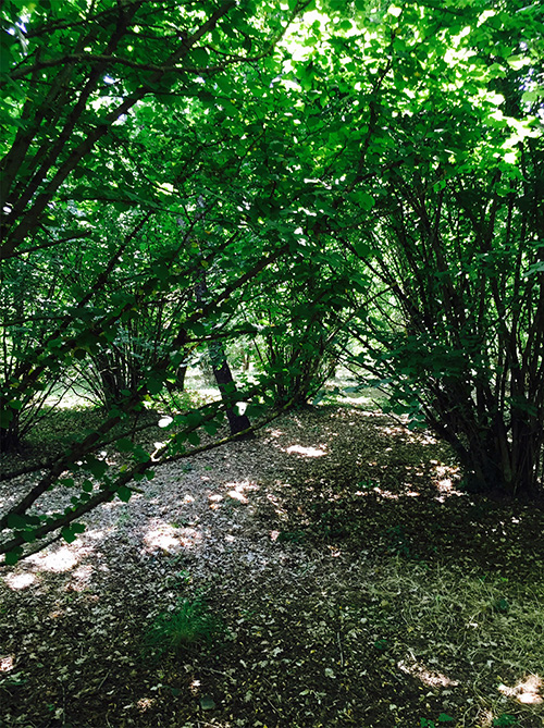 The truffle-laden woods where we searched for mushrooms.