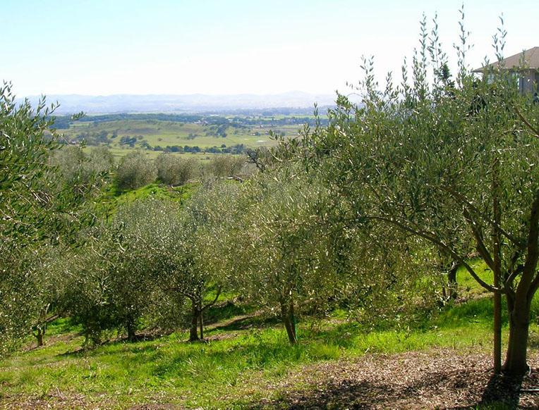 St. Helena Olive Oil Co.