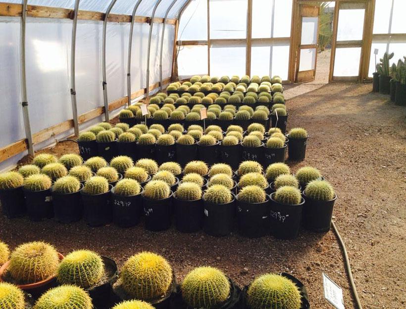 Cactus Joe's
