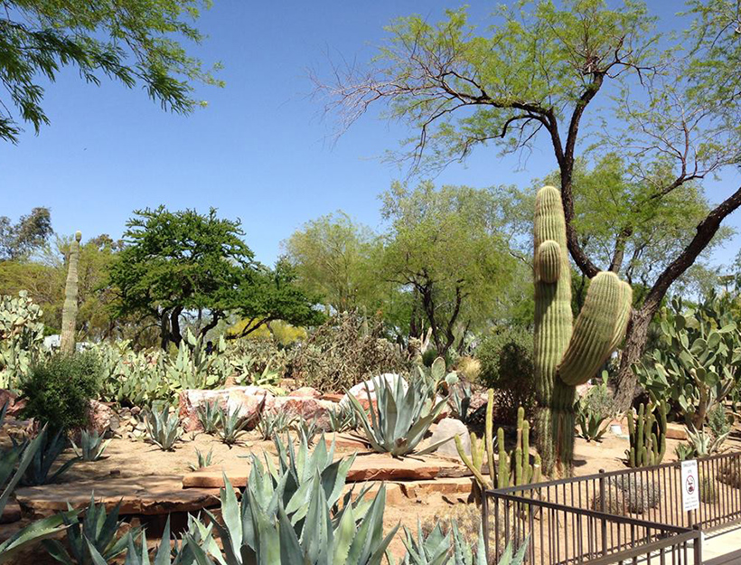 Ethel M. Chocolate Factory & Botanical Cactus Garden