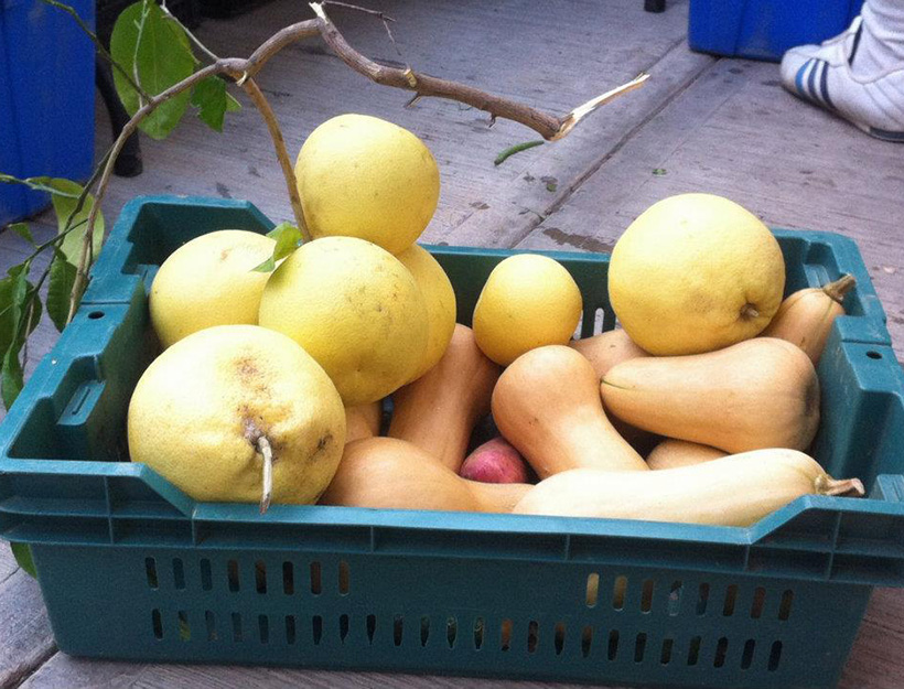 San José del Cabo Organic Farmers Market