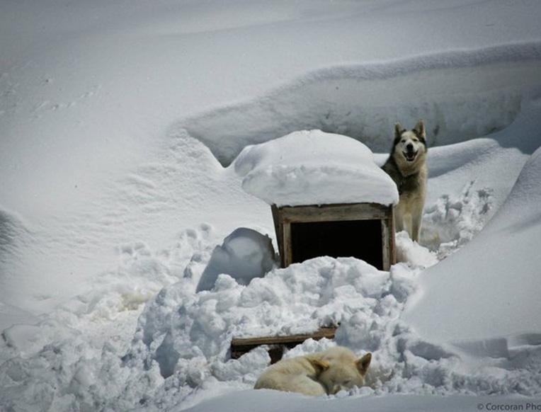 Krabloonik Mountain Dining & Dogsledding