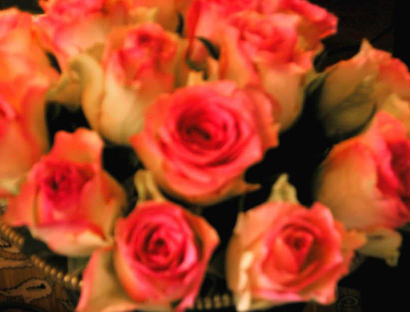 Roses Costes Dani Roses