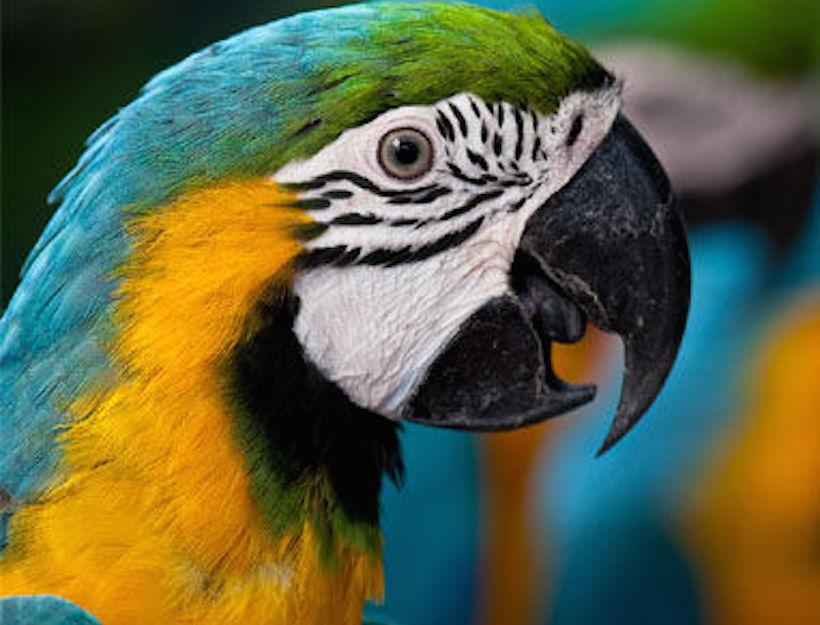 Serenity Bird Sanctuary