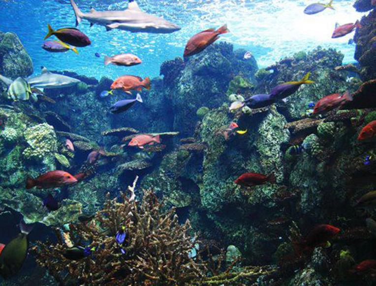 Aquarium Of The Pacific Goop
