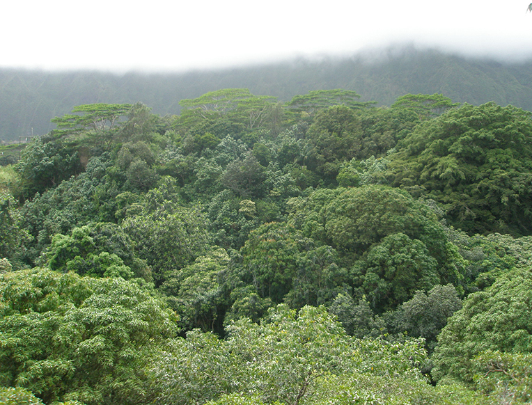 Maunawili Falls Hike