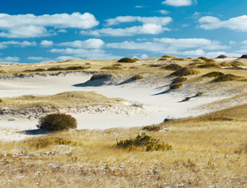 See the Sand Dunes