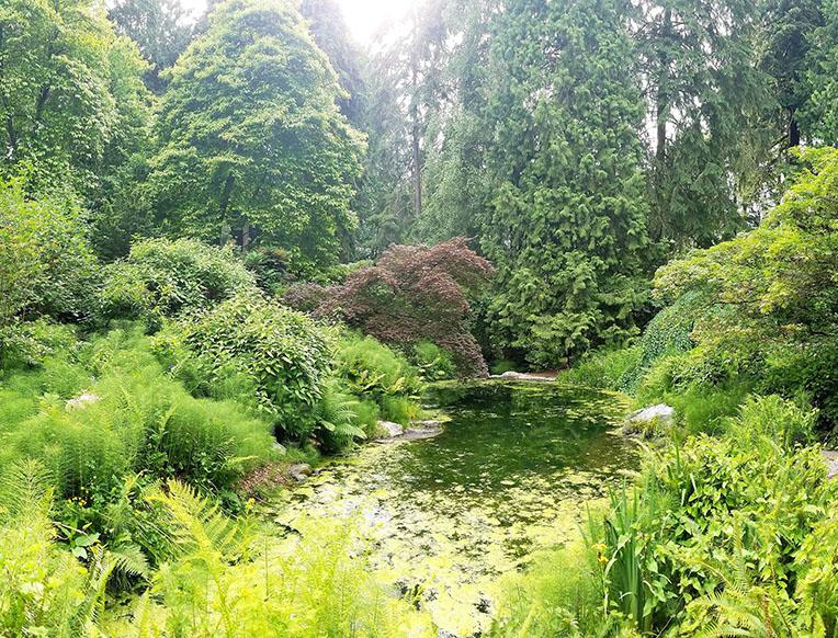 Washington Park Arboretum
