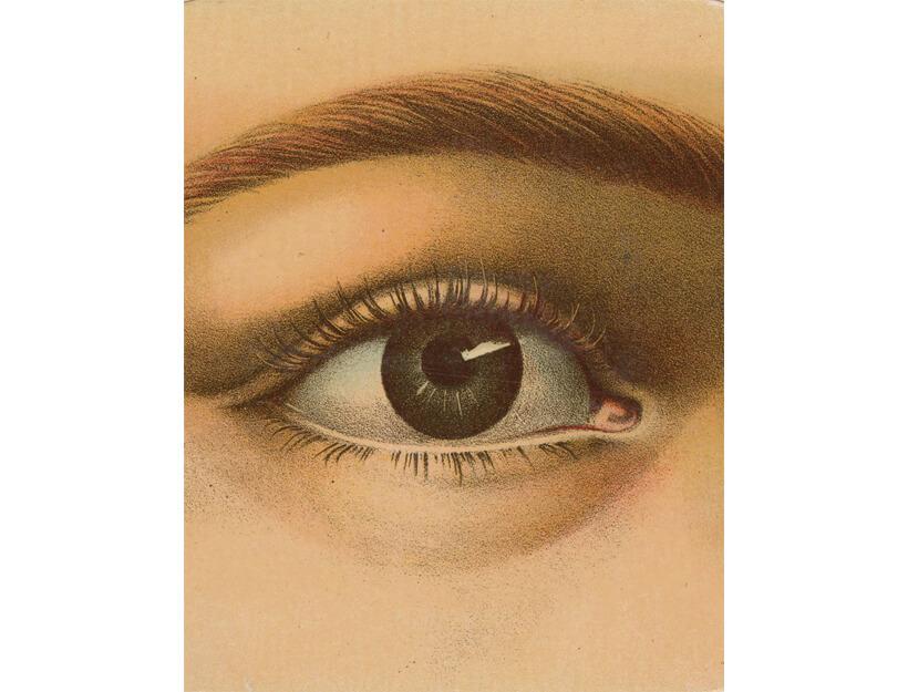 John Derian: Picture Book