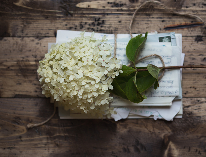 Old letters with hydrangea flower
