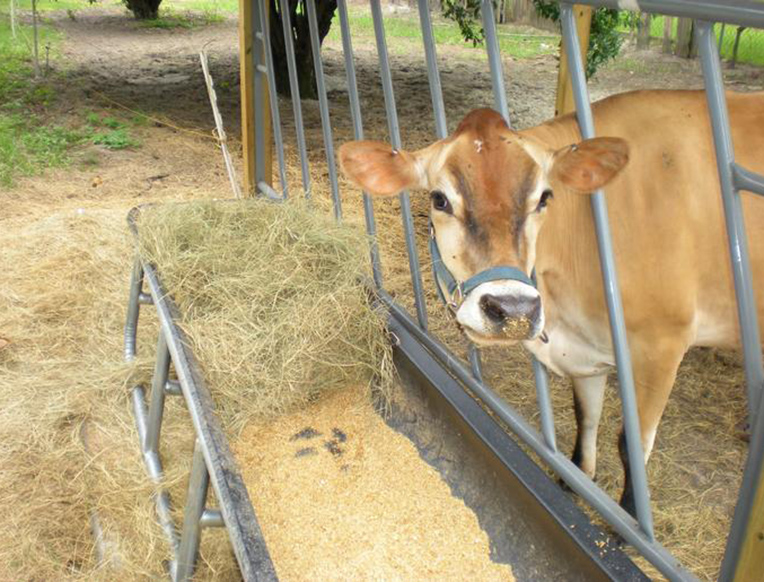 Winter Park Dairy
