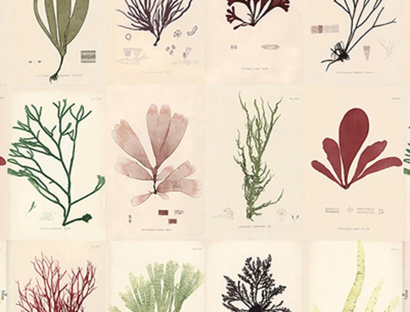 Sea Plants by John Derian