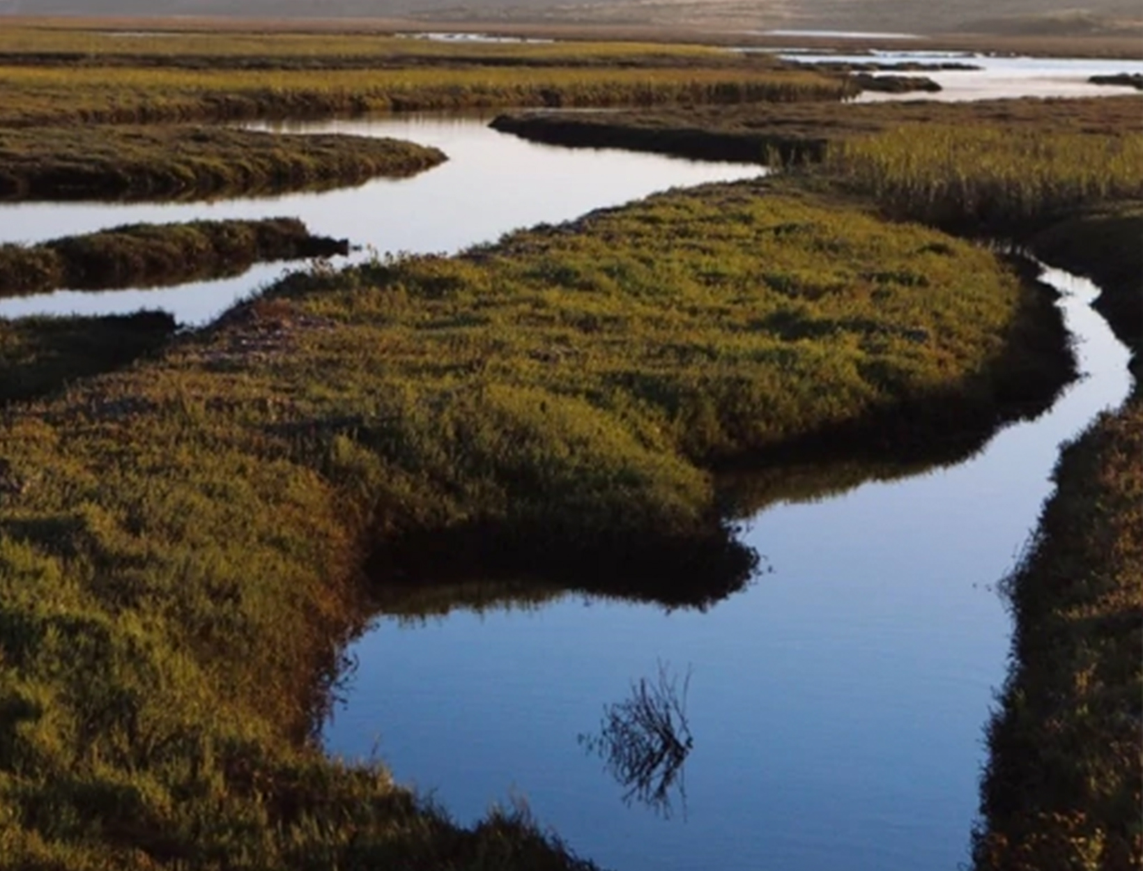 This Battery Runs on the Power of Estuaries