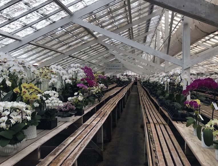 Zuma Canyon Orchids