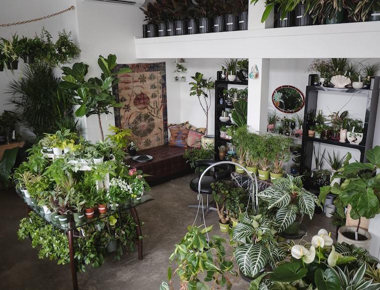 Homestead Plant Shop