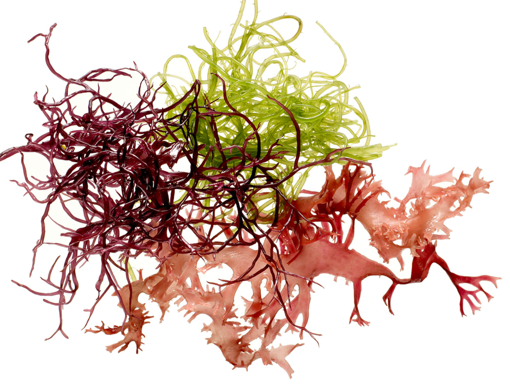 Godfrey's Guide: The Secret Glamour of Seaweed