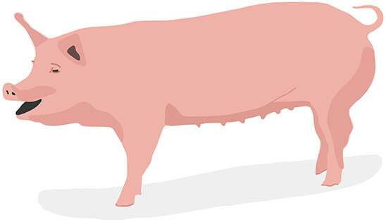 The goop Guide to the Butcher Counter
