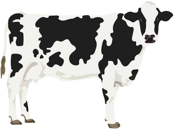 11 Animal Milks That Don't Come From Cows | Goop