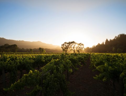Yes, You Should Pair Wine with Your Shrimp Tacos—Plus, More Tips from a Napa Winemaker
