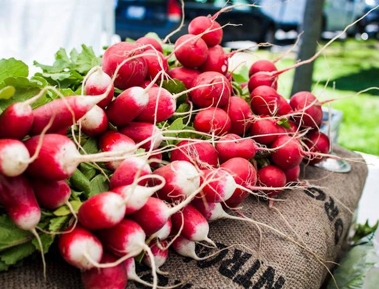 Newport Aquidneck Farmer's Market