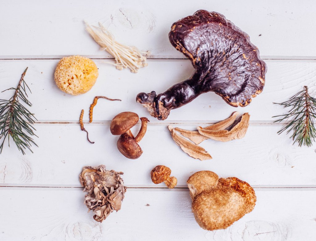 Healing Mushrooms to Add to Your Diet