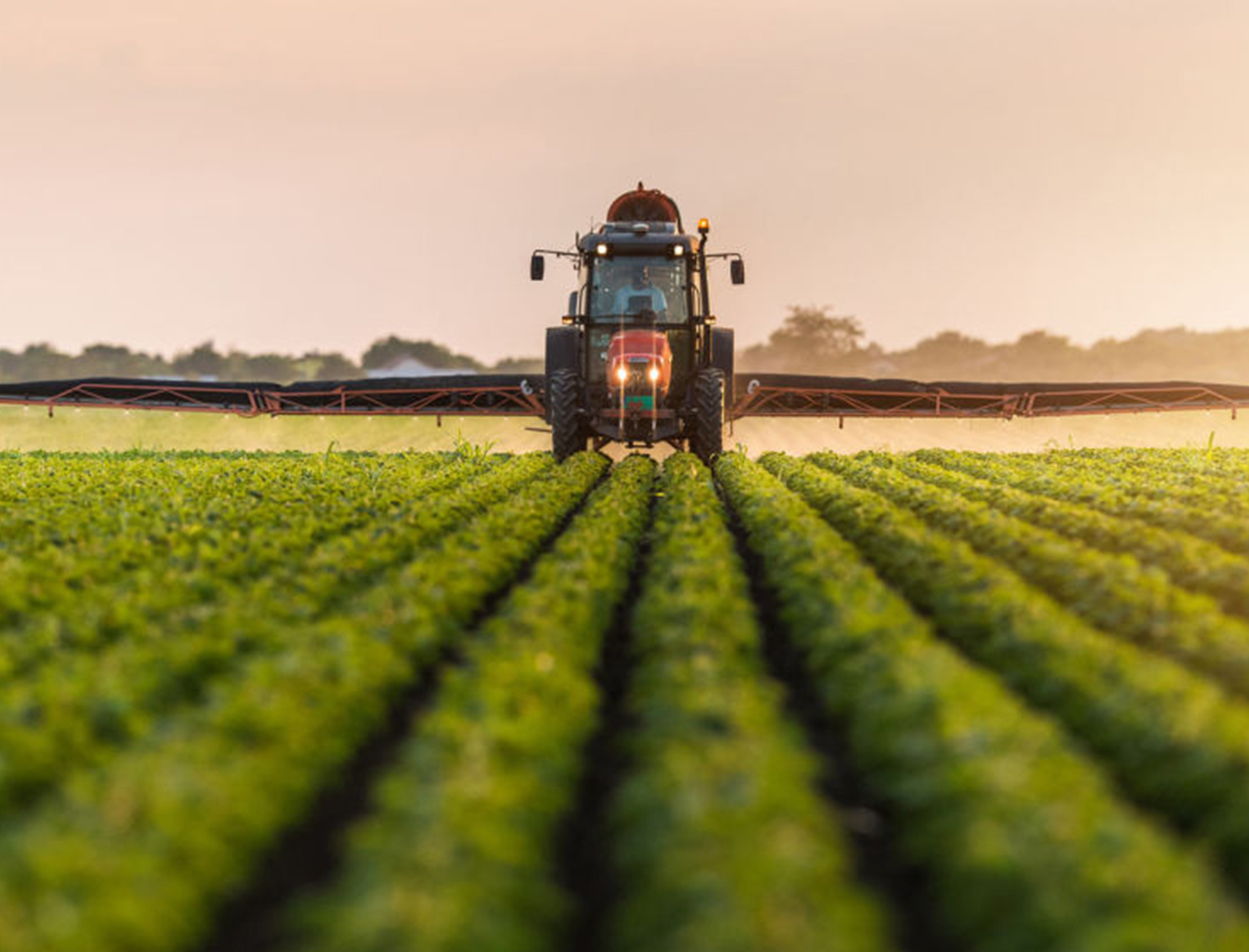 Did Monsanto Ignore Evidence Linking Its Weed Killer to Cancer?