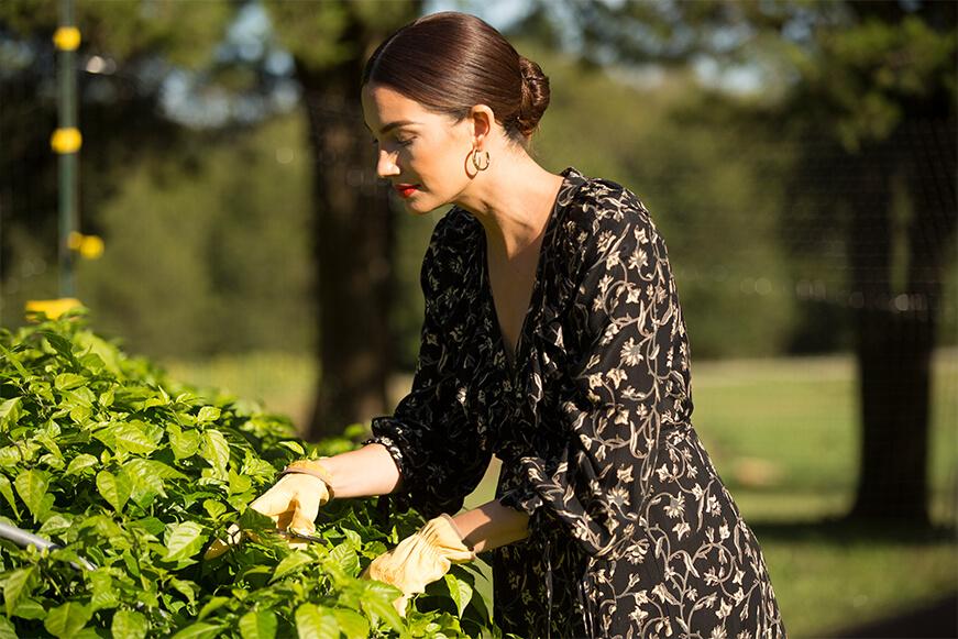 Woman in dress cutting herbs