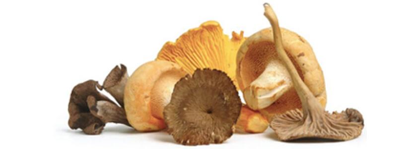 MIKUNI WILD HARVEST Wild Mushroom Medley 3 lb box