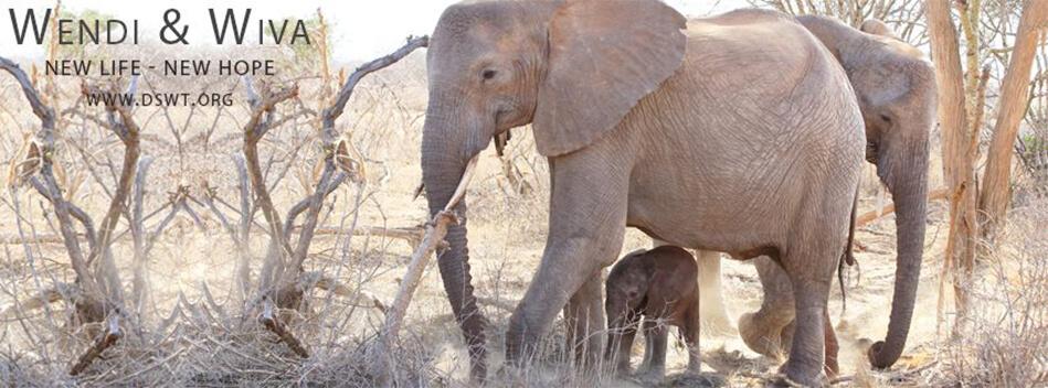 David Sheldrick Wildlife Trust Adopt an Orphaned Elephant