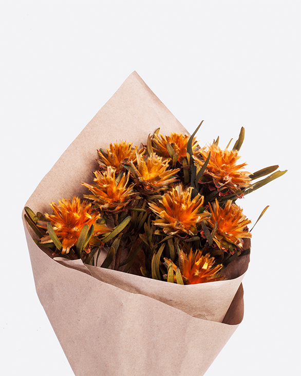 LOVE FOREVER DRIED FLOWERS