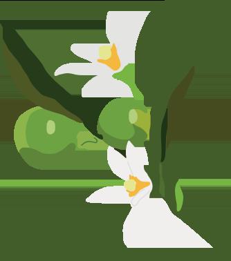 Australian kakadu plum