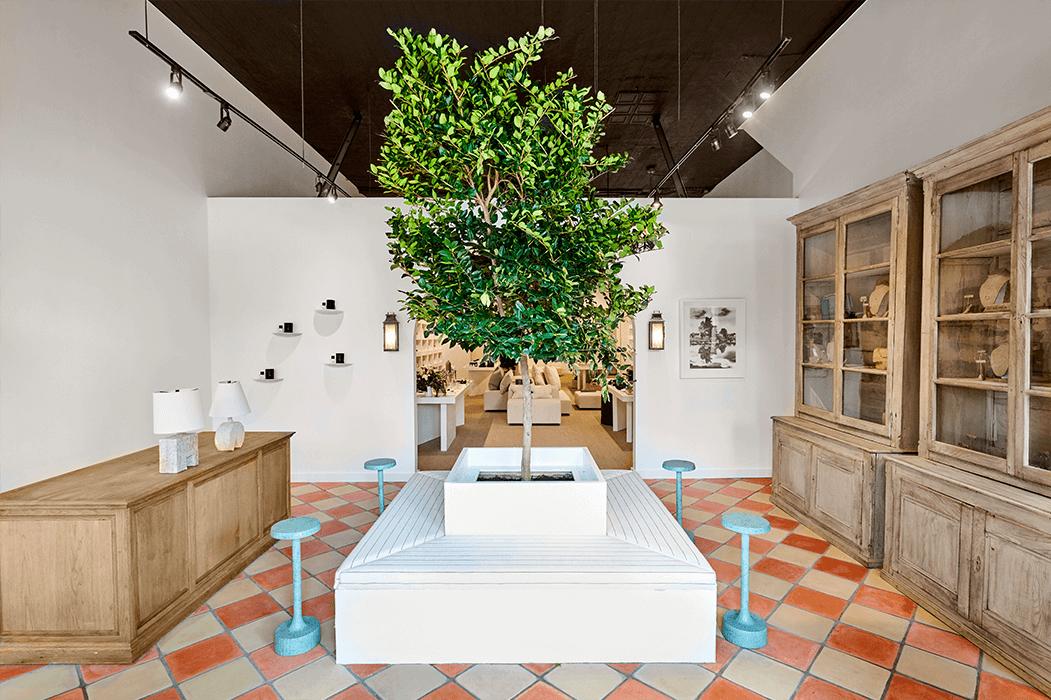 verdant wax-leaf ligustrum tree