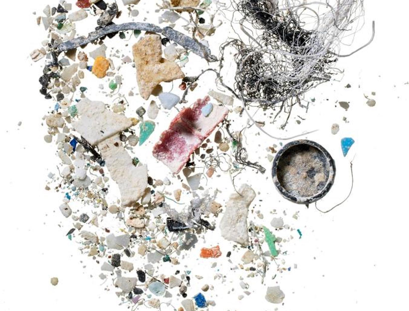 These Tiny Fish Reveal Our Oceans' Biggest Problem: Plastic