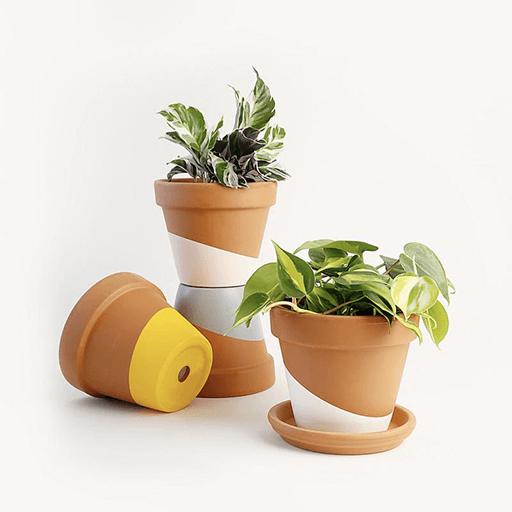 Horti Indoor Plant Subscription