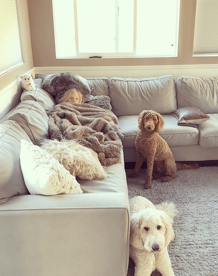 dogs and child on couch