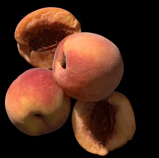 goop Fragrance Church Apricot