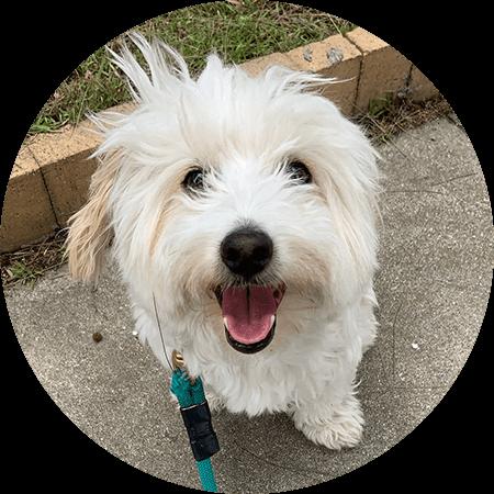 Norman Small Mutt Dog