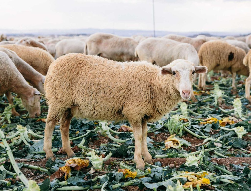 How We Can Save Our Food from Climate Change
