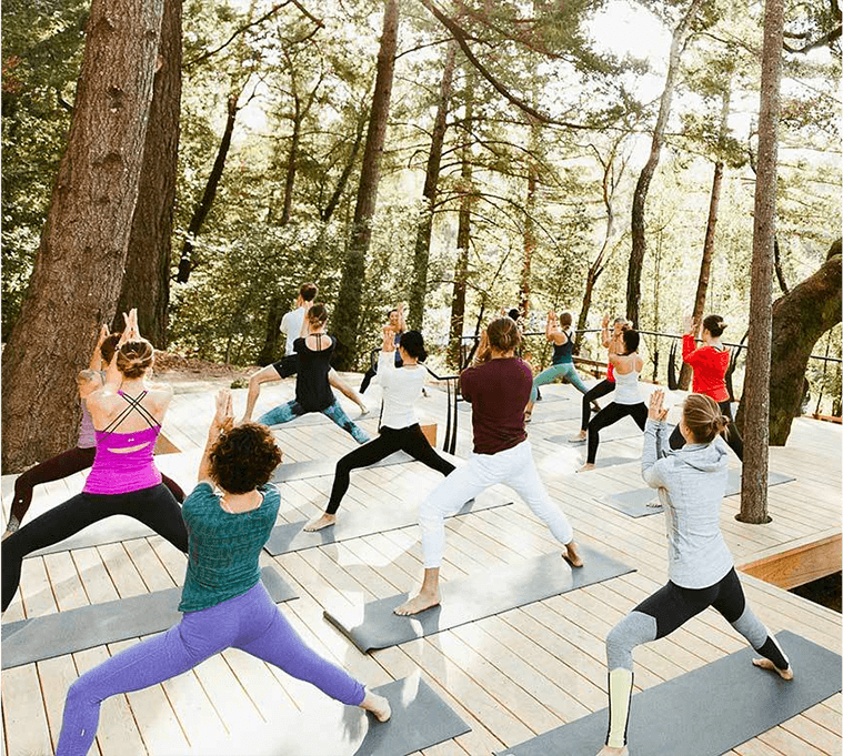 people doing yoga in the woods