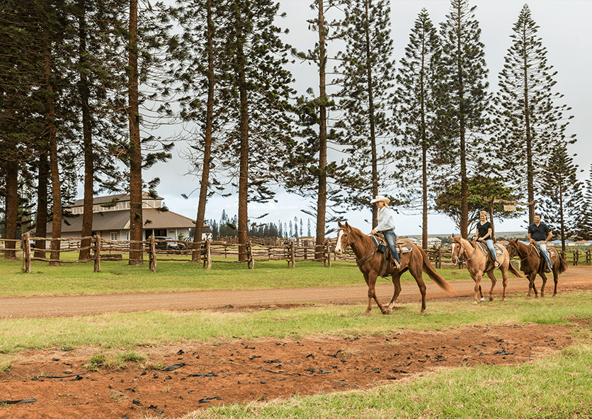 people riding horses