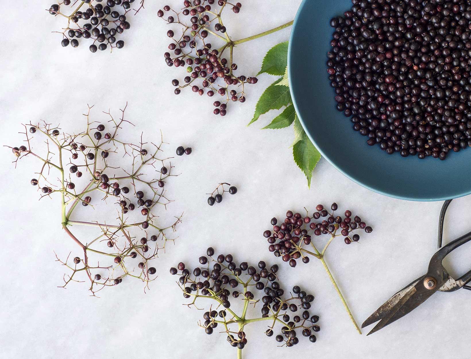 Why We're Taking an Elderberry Chew All Flu Season Long