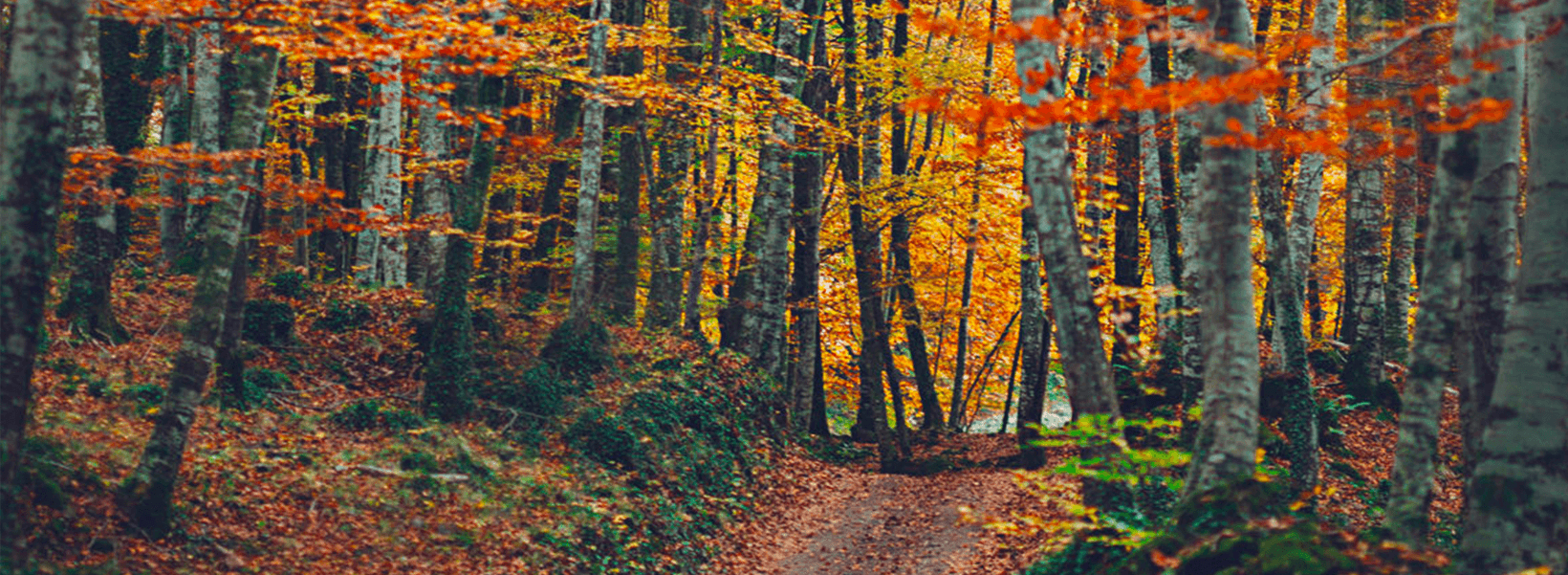 forest with colorful leaves
