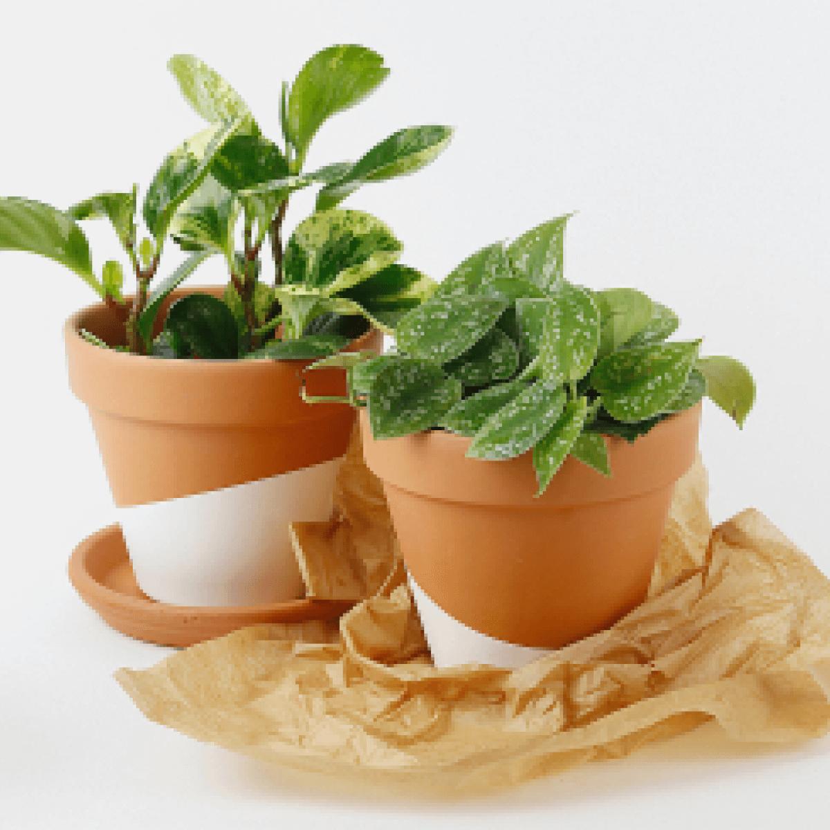 Horti Hard-to-kill plant club.