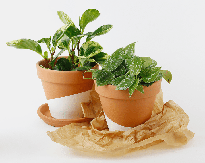 Horti Hard-to-kill plant club