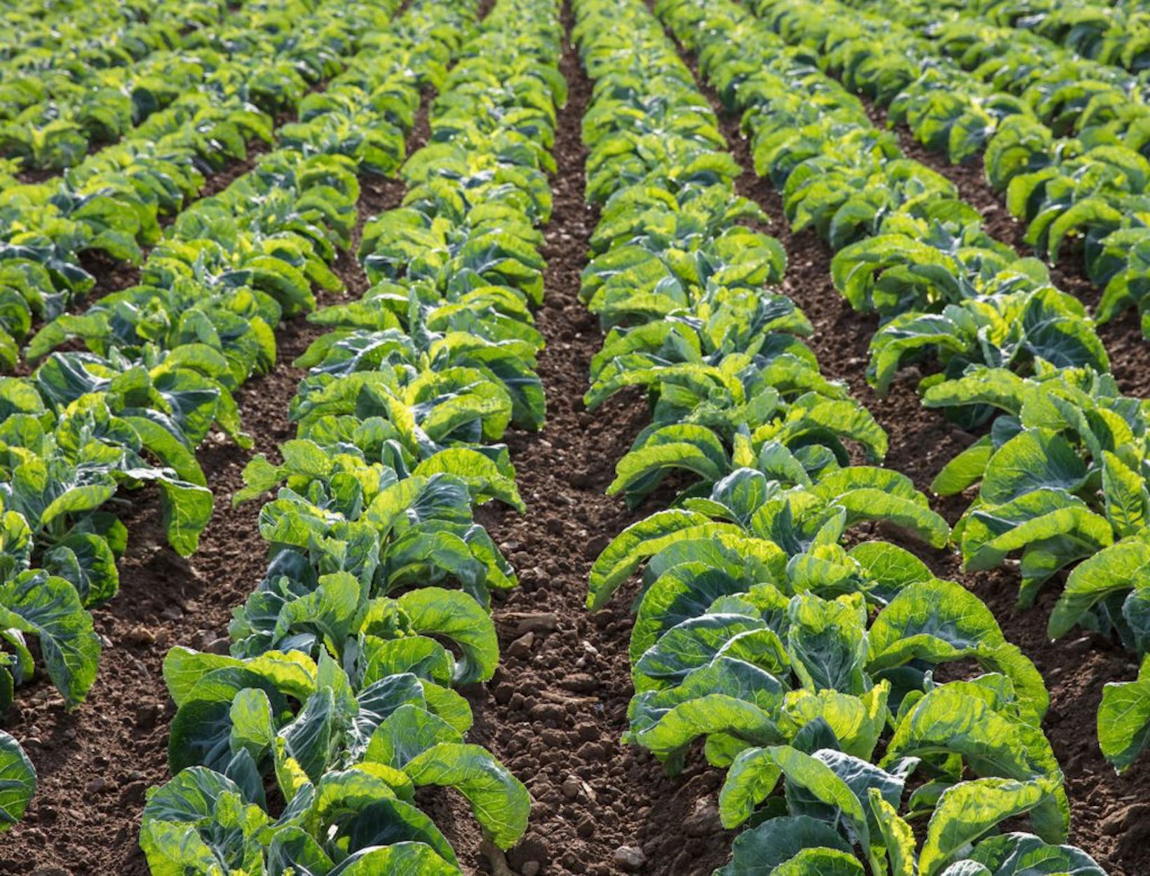 How Soil Health Is Reflected in the Gut